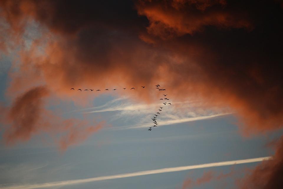 http://cdn2.hubspot.net/hubfs/604407/blog-files/birdmigration.jpeg
